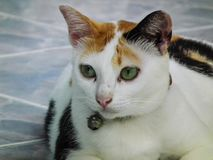 Lovely cat lifestyle animals portrait photography Royalty Free Stock Photography