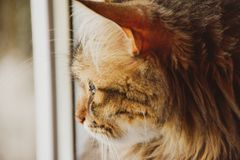 Lovely cat looking out the window, waiting for the owner stock images