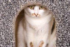 Lovely cat portrait Stock Photos