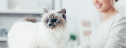 Free Lovely Cat Posing Stock Photo - 64625040