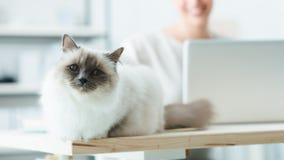 Lovely cat posing on a desk Stock Photo