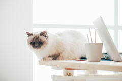 Lovely cat sitting on the desk Stock Photo