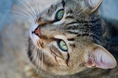 Closeup of tabby cat in Bitez Turkey royalty free stock images