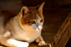 Lovely cat. A lovely cat is waiting for something Stock Photography