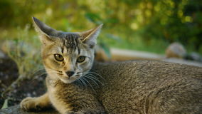 A lovely Cat Stock Photos