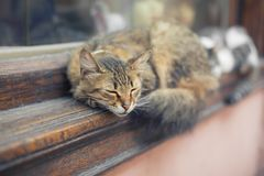 Lovely cats sleeping on the window sill royalty free stock photography