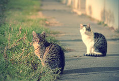 Lovely cats on street Stock Photos