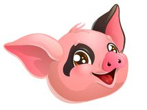Lovely pink and black pig head on white stock photos