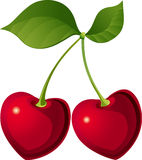 Lovely cherry. Decorative lovely cherry perfect for Valentine day Stock Photos