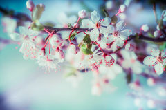 Lovely cherry blossom, floral nature border at blue sky Stock Images