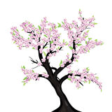 Lovely cherry blossom tree Stock Photography