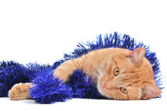 Lovely Christmas Kitten. Lying on the Floor Stock Photography