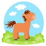 Lovely colt on glade. In summer Royalty Free Stock Images