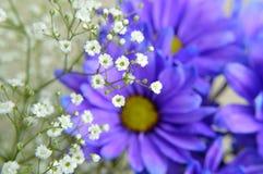Baby`s Breath on Blue Daisy Flowers royalty free stock photo