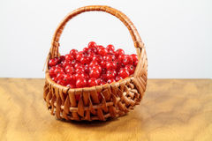 Lovely Currants. Currants in a wickerwork plaited basket on a wooden table before a white background Stock Image