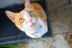 Lovely, cute cat looking into camera Royalty Free Stock Photos