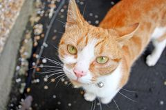Lovely, cute cat looking into camera Royalty Free Stock Photo