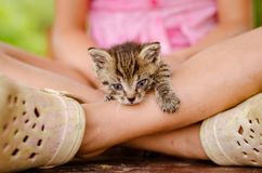 Lovely cute cat trying to go out from girl. Adorable cute kitty cat in hands of little child girl Royalty Free Stock Photos