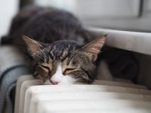 Lovely Cute Cat who is sleeping royalty free stock photos