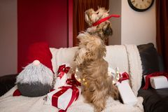Lovely, cute puppy with reindeer antlers stock photo