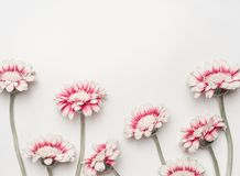 Lovely daisies flowers on white desktop background, floral border, top view. Creative layout for holidays greeting Stock Photography