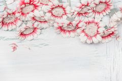 Lovely daisies flowers on white shabby chic background, floral border, top view. Creative layout for holidays greeting Royalty Free Stock Images