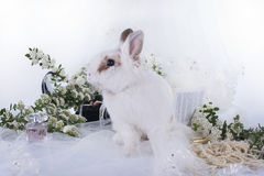 Lovely decorative rabbit on table with jewelry. Royalty Free Stock Images
