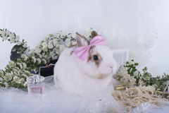 Lovely decorative rabbit on table with jewelry Stock Photo