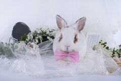 Lovely decorative rabbit on table with jewelry Royalty Free Stock Photos