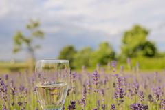 Lovely and delicious lavender champagne in front of an lavender flowers field. Delicious lavender champagne in front of an lavender flowers field. Green trees stock images