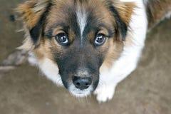 Lovely Dog Stock Photos