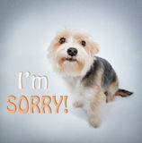 Lovely dog beg pardon Stock Images
