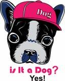 Lovely dog head cartoon wear a hat vector illustration