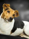 Lovely dog Stock Photography