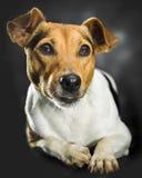 Lovely dog Stock Photo