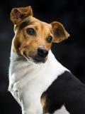 Lovely dog Royalty Free Stock Photo