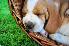 Lovely dog portrait Stock Photography