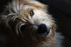 Lovely dog stare at the camera, Under light and shadow. stock photo