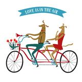 Lovely dogs cyclists  illustration. Cute drawn cartoon dogs on tandem bicycle with basket and flowers. Bicycle postcard about love Stock Photos