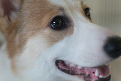 Lovely dogs. Fall in love with it lovely like dogs pretty Stock Photography