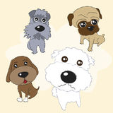 Lovely Dogs Royalty Free Stock Images