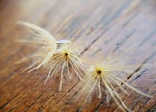 Lovely dry grass. Royalty Free Stock Photo