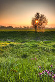 Lovely early morning spring scenery Stock Images