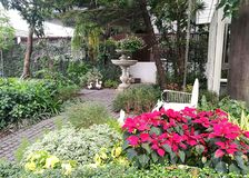 Lovely English garden with  Xmas tree, Poinsettia bush, and other tree. In the backyard Royalty Free Stock Photos