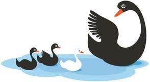 Lovely family of swans Stock Image