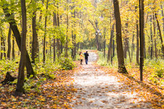 Lovely family walking in the autumn forest. Healthy lifestyle Royalty Free Stock Photos