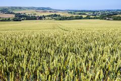 Panorama of East Sussex, England. View towards Firle Beacon. The lovely farming landscape of East Sussex is shown here, with crops turning to gold on the edge royalty free stock photo