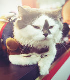 Lovely fatty cat in Instagram dark toned effect. Stock Photography