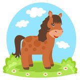 Lovely female horse on glade. In summertime Royalty Free Stock Photography