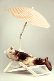 Lovely ferret portrait on beach chair in studio. Ferret portrait on beach chair in studio Royalty Free Stock Photos